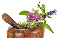 Mortar and plants. In front of white background Royalty Free Stock Photography