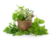 Free Mortar With Herbs Royalty Free Stock Photography - 20079017