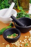 Mortars and pestles with pine nuts Stock Photography