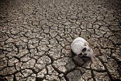 Morte al deserto Fotografie Stock Libere da Diritti