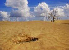Morte in Death Valley Fotografie Stock Libere da Diritti