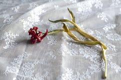Morte di un tulipano Fotografia Stock