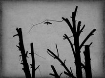Morte do pássaro Fotos de Stock Royalty Free