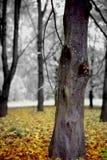 Morte entro Autumn Immagini Stock Libere da Diritti