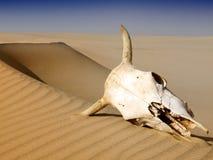 Morte nel deserto Fotografie Stock Libere da Diritti