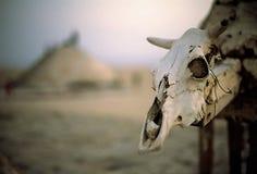Morte nel sahara Fotografie Stock