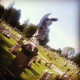A morte pode ser bonita fotografia de stock