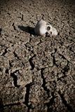 Morte t il deserto Fotografie Stock Libere da Diritti