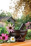 Mortero y maja con las hierbas curativas Foto de archivo libre de regalías