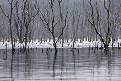 Morti dell'inverno fotografia stock