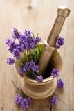 Mortier avec des fleurs de lavande images libres de droits
