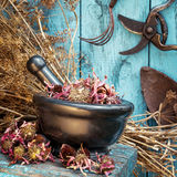 Mortier avec les herbes curatives et l'équipement de jardin secs Photos stock