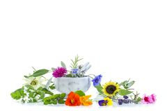 Mortier en céramique avec des herbes et des plantes médicinales fraîches sur le blanc préparant les plantes médicinales pour la s photographie stock