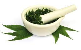 Mortier et pilon avec les feuilles médicinales de neem image libre de droits