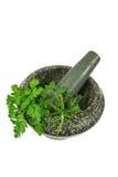 Mortier et pilon avec les herbes fraîches Image stock