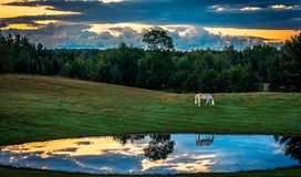Mortning sunrise with horse reflefcted in nearby pond stock photography
