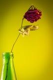 Morto è aumentato in una bottiglia verde Immagini Stock Libere da Diritti