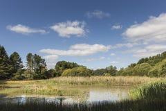 Morton Loch i pickolaflöjt, Skottland Royaltyfri Fotografi