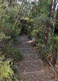 Morton National Park hiking Royalty Free Stock Photos
