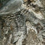 Morts et arbre coupé dans la putréfaction Photos libres de droits