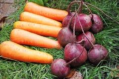 Morötter och röda beta Royaltyfri Fotografi