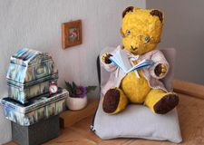 Morulet bear reading Royalty Free Stock Photo