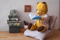 Morulet bear reading Stock Photo