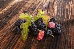 Morus fruit. Stock Images