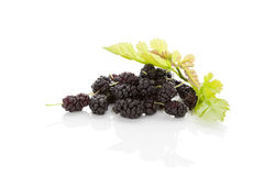 Morus fruit. Stock Photography