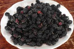 Morus. Mulberry on a plate stock photo