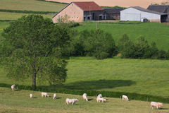 Morvan Farm Royalty Free Stock Photo
