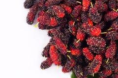 Morwa jest superfruit dla zdrowie morwy na białego tła zdrowym morwowym owocowym jedzeniu odizolowywającym Obrazy Stock
