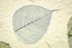 Morwa papier z w górę boda liścia obrazy stock