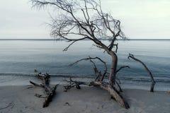 Morza Bałtyckiego wybrzeże blisko Ahrenshoop Zdjęcia Stock