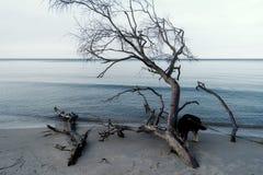 Morza Bałtyckiego wybrzeże blisko Ahrenshoop Zdjęcie Royalty Free