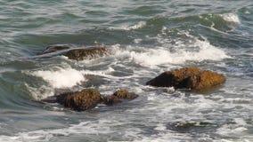 Morza, ocean temat zdjęcie wideo