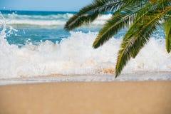 Morza, plaży i palmy gałąź, Zdjęcia Stock
