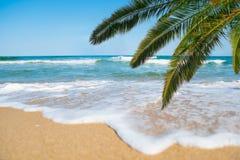 Morza, plaży i palmy gałąź, Obraz Royalty Free