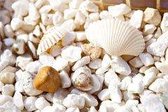 Morze łuska kamień ramę Fotografia Royalty Free