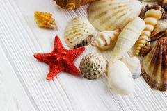 Morze łuska kolekcję na białym drewnianym tle Fotografia Stock