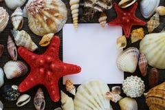Morze łuska kolekcję na drewnianym tle Zdjęcia Royalty Free