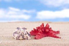 Morze łuska na piaskowatej plaży i niebieskiego nieba tle zdjęcie stock