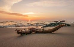 Morze łuska opowieść Zdjęcia Royalty Free