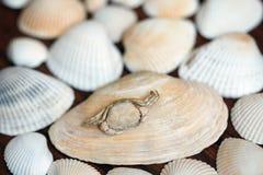 Morze łuska tło na drewnianej powierzchni Zdjęcie Stock