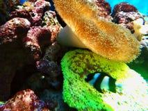 Morze Fotografia Stock