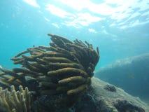 Morze zdjęcie royalty free