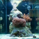 morze akwarium morze zdjęcie royalty free
