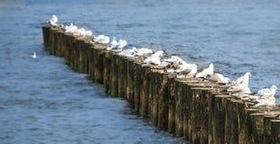 Morze Bałtyckie idylla zdjęcia royalty free