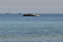 Morze Bałtyckie, żeglowanie łódź Obraz Stock