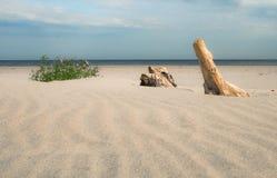 Morze Bałtyckie plaża z suchym drewnem obraz stock